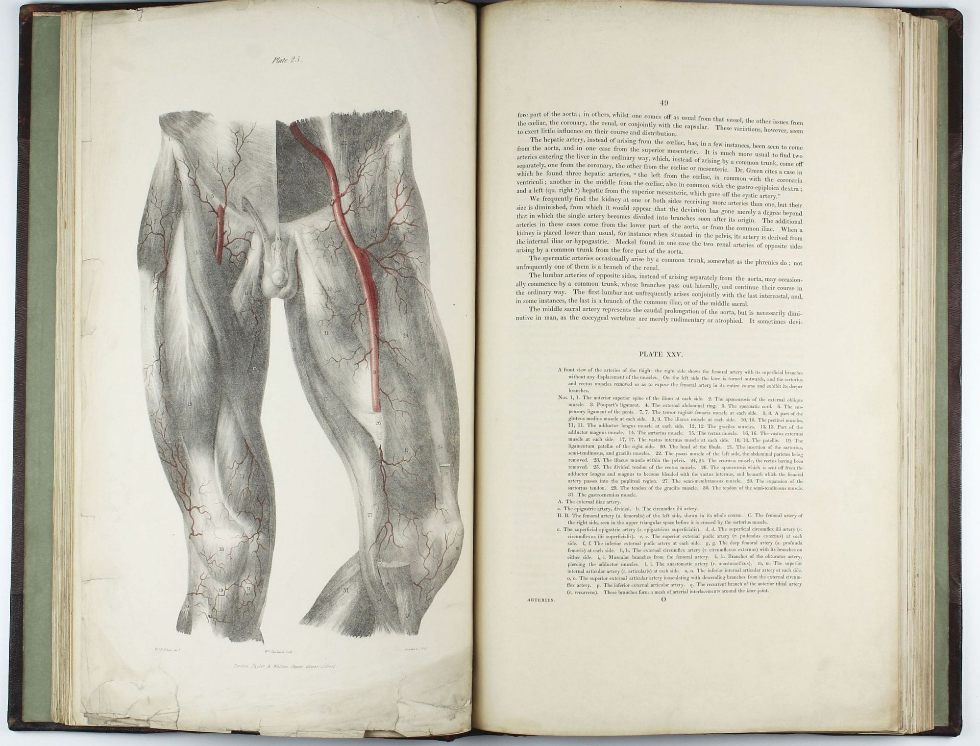 A series of anatomical plates in lithography with references and physiological comments illustrating the & A series of anatomical plates in lithography with references and ...