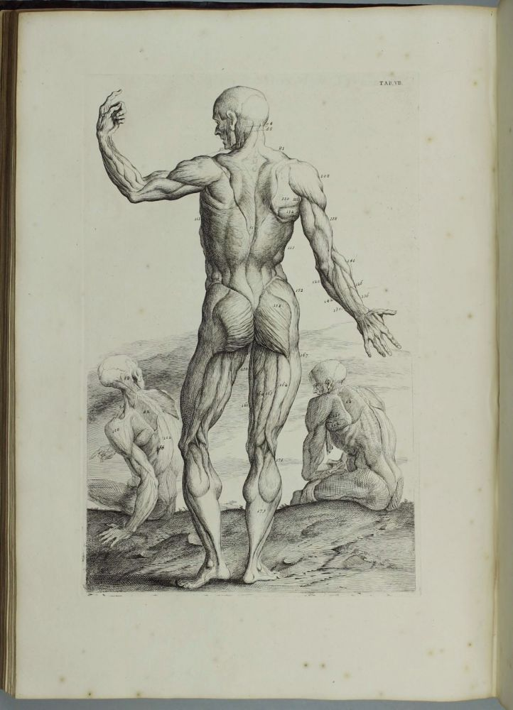 Myotomia Reformata Or An Anatomical Treatise On The Muscles Of The
