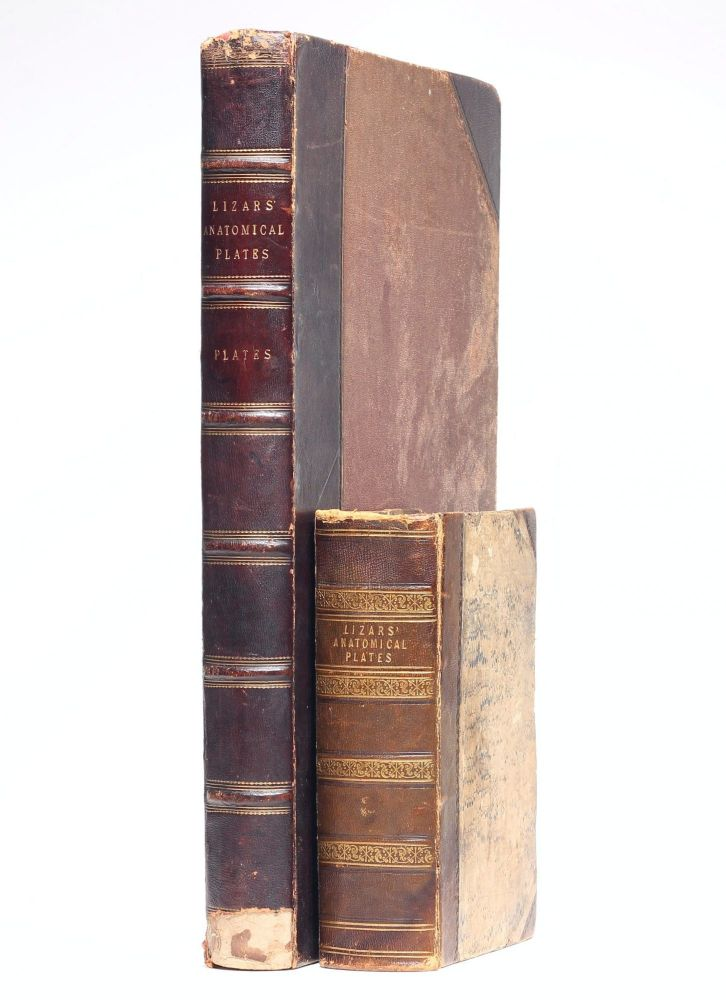 A System of Anatomical Plates of the Human Body, Accompanied with Descriptions and Physiological, Pathological, and Surgical Observations. John LIZARS.