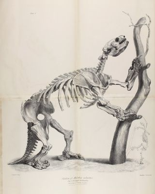 Description of the Skeleton of an Extinct Gigantic Sloth, Mylodon robustus, Owen, with...